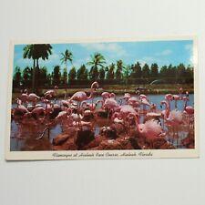 Flamingos At Hialeah Race Course Florida Vintage Postcard