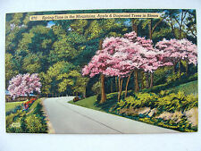 Linen Postcard Spring in Mountains Apple & Dogwood Trees Colourpicture New 1945