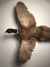 Ringneck Rooster Pheasant Mount Taxidermy In Flight Flying Game Bird