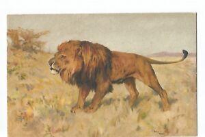 ILLUSTRATION , FELIN , LION