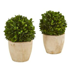 "6"" Boxwood Ball Preserved Plant In Planter (Set Of 2)"