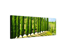 120x40cm Zypresse Panorama Weinberg Toskana grün Italien Bild Leinwand Sinus Art
