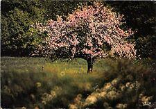 BR13199  Image du pintemps arbres tree   france