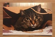 Happy Birthday Card With Envelope ~ Kitty, Cat, Wish, Thoughtful Message ~ USA