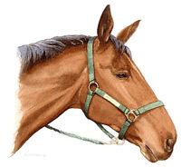 Horse Head POSTCARD Animal Painting Art Steve Greaves Watercolour Art Print Card