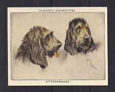 1939 Arthur Wardle Dog Art Head Study Player Cigarette Trade Card Otterhound