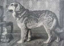 Antique DOG Print The Leonberg Dog & Toy English Terrier 11x14 Archival Matting