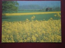 POSTCARD SOMERSET BACKWELL - RAPE FIELDS - SUMMER'S DAY
