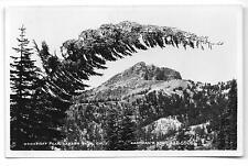 Lassen National Park Brokeoff Peak & Odd Shaped Conifer Real Photo PC circa1950