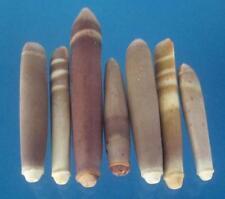 04205 Pencil Sea urchin spine - Heterocentrotus mammillatus-02, 1 oz