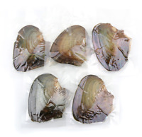 Wholesale 100pcs Oysters With Real Pearl 7-8mm Freshwater Pearl Vacuum Packaging