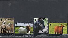 Montserrat 2011 MNH Farm Animals 4v Set Sheep Boer Goat Black Donkey Red Cattle