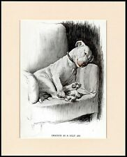 BULL TERRIER CRACKER IN A CHAIR LOVELY DOG PRINT MOUNTED READY TO FRAME