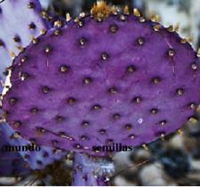 TUNERA VIOLETA Opuntia (frutos comestibles) 15  semillas