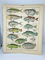 Antique large hand-colored print 1843.Oken's Naturgeschichte Plate 51 Fish