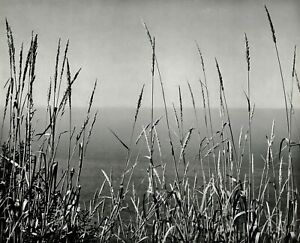 1959 Vintage EDWARD WESTON Grass Pacific Ocean Landscape Photo Gravure Art 12x16