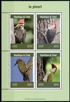 Chad 2019 MNH Woodpeckers Green Woodpecker 4v M/S Pivert Birds Stamps