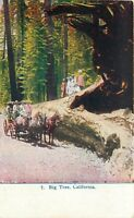 DB Postcard CA G333 Big Tree California Horse Buggy Yosemite Valley Sierra Nev