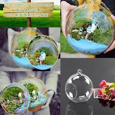 8cm Clear Hanging Glass Flowers Plant Vase Terrarium Container DG