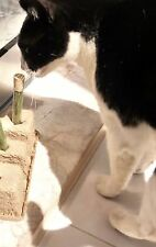 Catnip test tubes for beginner cats Organic CATNIP irresistible for catnip lover
