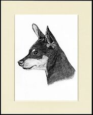 MINIATURE PINSCHER LOVELY HEAD STUDY DOG SKETCH PRINT MOUNTED READY TO FRAME