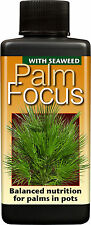 300ml - PALM FOCUS - Nutrients / Food for Palm Trees / DoctorBlooms