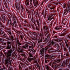 Rouge Ver de Terre Appâts Pour la Pêche Ver Leurres Crochets Appâts Tackle 50Pcs
