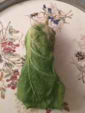 Salat,Gemüse, Lebensmittel,Deko, Tischdeko, Dekoration, Küche, Esszimmer, Tisch,