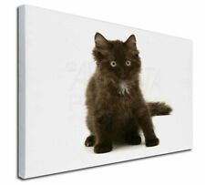 "Cute Black Fluffy Kitten 30""x20"" Wall Art Canvas, Extra Large Pict, AC-184-C3020"