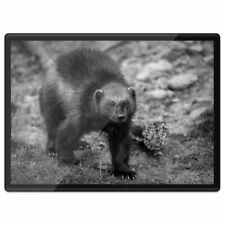 Plastic Placemat A3 BW - Black Wolverine Animal  #37762