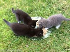 DONATE TO TNR KITTENS FERAL CAT RESCUE FEED VET SPAY Rec COLOR PHOTO