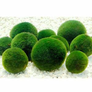 5Pcs Mini Marimo Moss Balls Shrimp Nano Seaweed Ball Aquarium Fish Tank Decor US