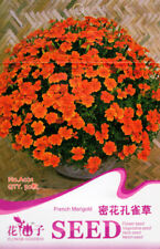 50 Seeds/Pack French Marigold Seed Dense Tagetes Patula Original Package A021