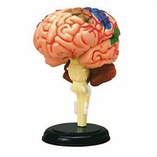 4D BRAIN Human Body Anatomy 3D Puzzle Model kit science Medical NEW