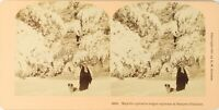 Estéreo Natural Nieve Montaña Perro, Foto Vintage Albúmina PL62L3