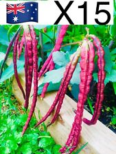 15X RED Snake Bean Seeds Yardlong Bean Borboti Bora Chinese Long Bean Vegetable