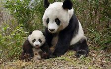 Stock JPEG DVD HQ imágenes fotos los sitios web de dominio público blogs animales Collection