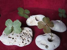 Un trèfle à 4 feuilles sur un galet : LE presse papier 100% nature