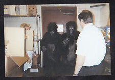 Vintage Photograph Man & Woman With Two Gorillas - Costumes Halloween