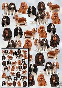 Cavalier King Charles Spaniel Dog Gift Wrapping Paper - Starprint 1 sheet + card