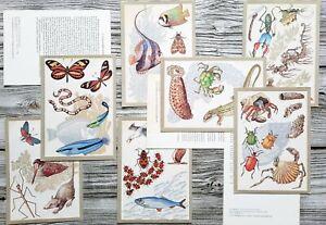 Sea Animals Botanical Fish Birds Butterflies Species Vintage Set of 15 postcards