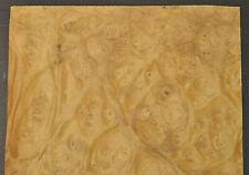 Myrtle Burl Raw Wood Veneer Sheet 9 X 14 Inches 150th 4709 46
