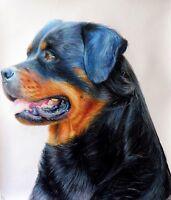 Ritratto portrait di ROTTWEILER (dog) - Matite colorate cm. 60 x 70