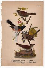 Sparrows Towhee Thrush Original 1890 Warren Bird Chromolithograph