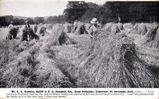 Great Hollanden, Underriver, Sevenoaks. Crop Grown Using Hadfield's Fertiliser.