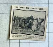 1915 Arabs Keeping The Australian Soldiers Horses Cool
