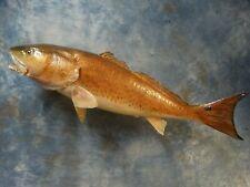 "Monster 40"" Bull Redfish Taxidermy Real Skin Fish Mount Fishing Lodge Decor"