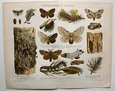 """Falter, Spinner - """"Waldverderber"""" - diverse Arten - Cromolithographie um 1898"""