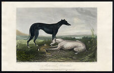 Antique Print-GREYHOUND-DOG-WHIPPET-MOSES-Beckwith-Giles-1847