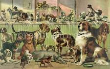 KENNEL CLUB DOGS Vintage Dog Breed Rolled Canvas Giclee Print 32x24 in.